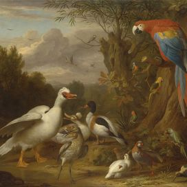 800px-Jacob_Bogdani_-_A_Macaw,_Ducks,_Parrots_and_Other_Birds_in_a_Landscape_-_Google_Art_Project