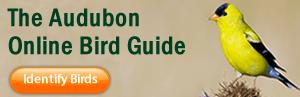 bird_guide_ad_option_17.fw_ (1)