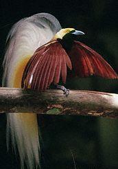 birdparadise