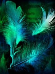 feather_fly