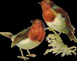 victorian_birds_1_quaddles_by_quaddles