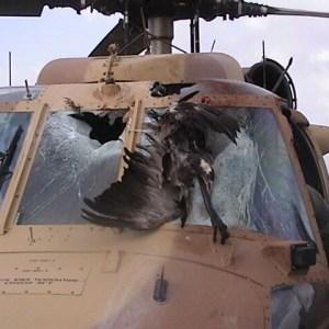 IAF_UH-60_after_birds strike_outside