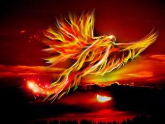 phoenix-500469_960_720
