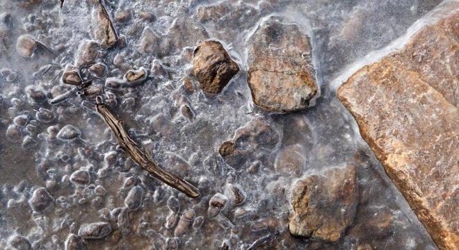 Um pedaço de madeira antigo emerge do degelo nas montanhas do Wyoming