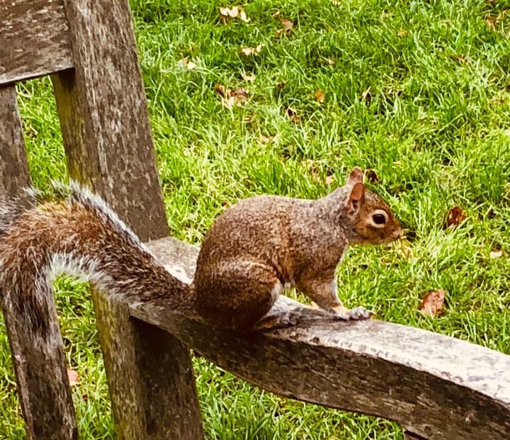 Squirrels in Hyde Park.JPG