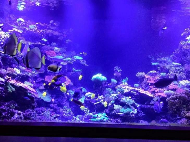 Best Led Lights Reef Tank