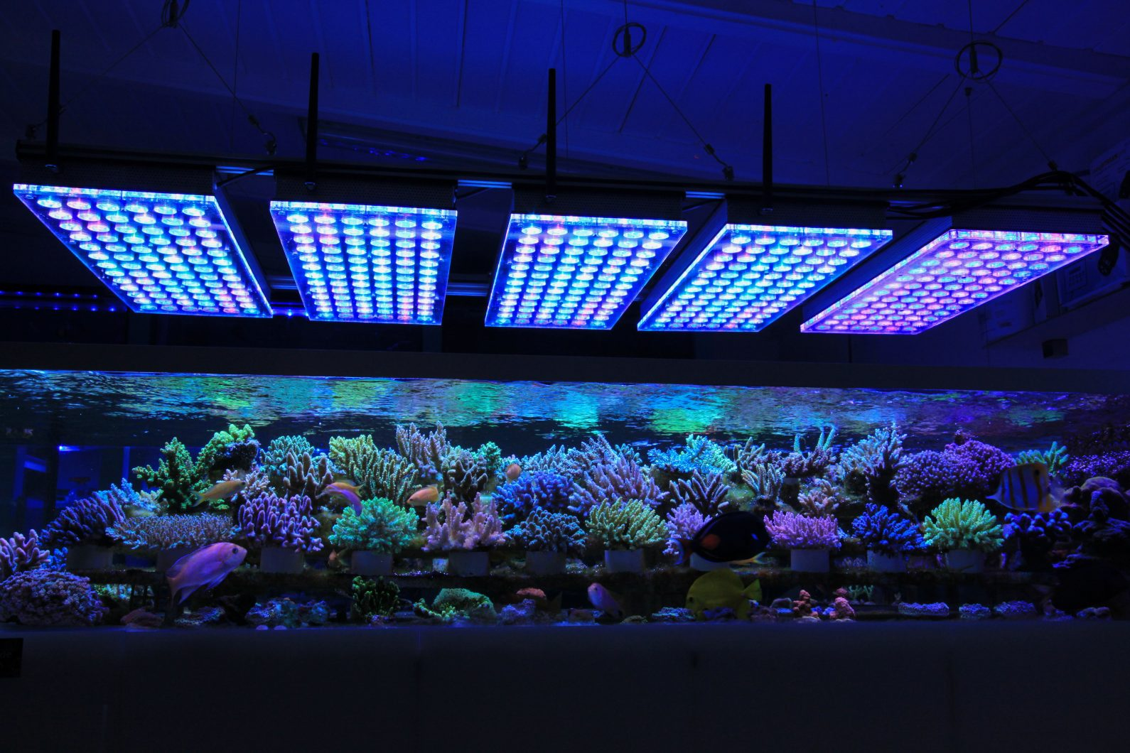 Led Light Aquarium