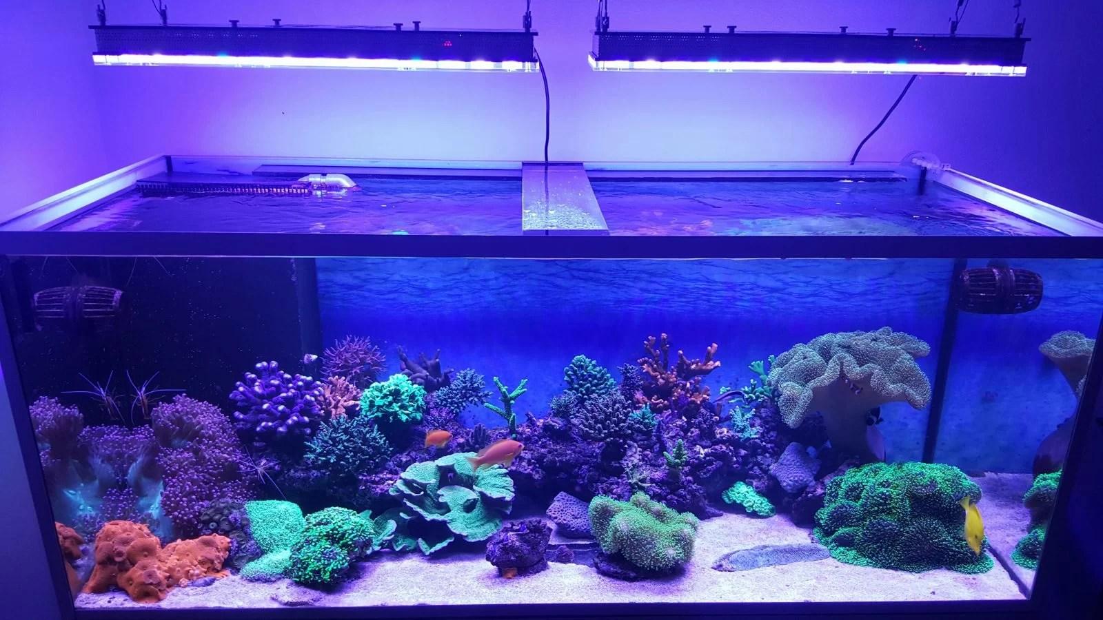 Best Aquarium Led Lighting 2017