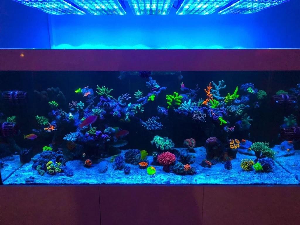 Aquarium Led Beleuchtung Orphek Reef Aquarium Led Beleuchtung