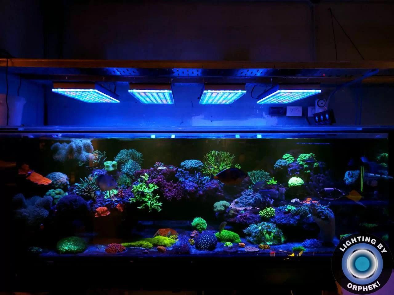 Led Beleuchtung Fur Offentliche Aquarium Orphek