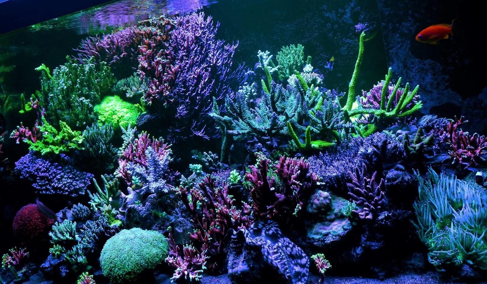 Led Aquarium Moonlight Night View Orphek