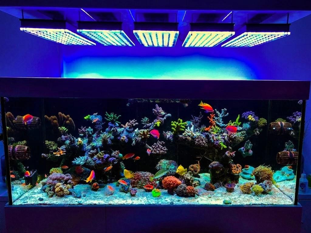 Reef2reef Orphek Atlantik Led Aquarium Beleuchtungsfotos Orphek