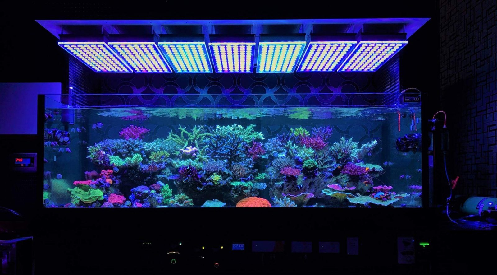 Erstaunlicher Japanischer Riff Tank Unter Atlantik V4 Led Beleuchtung Orphek
