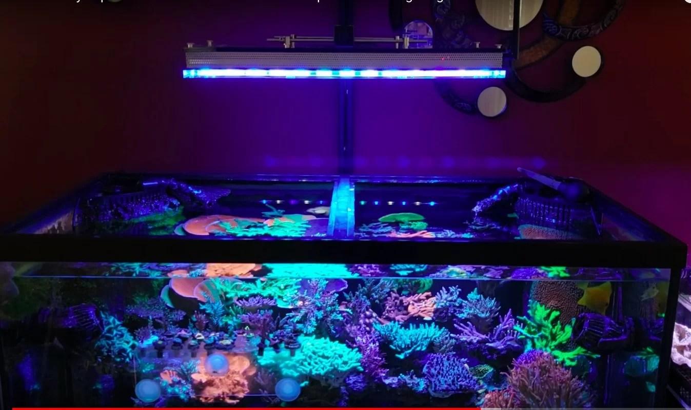 Review Warum Orphek Atlantik V4 Ist Das Beste Reef Aquarium Led Lightingreview Warum Orphek Atlantik V4 Ist Das Beste Reef Aquarium Led Beleuchtung Orphek
