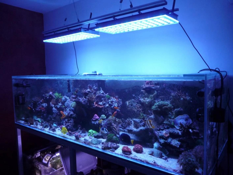 Welche Aquarium Led Leuchten Wahle Ich Fur Mein Aquarium Orphek