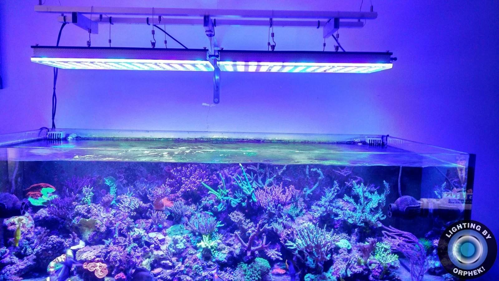 Ein Weiterer Zufriedener Kunde Aus Spanien Atlantik V4 Led Aquarium Orphek