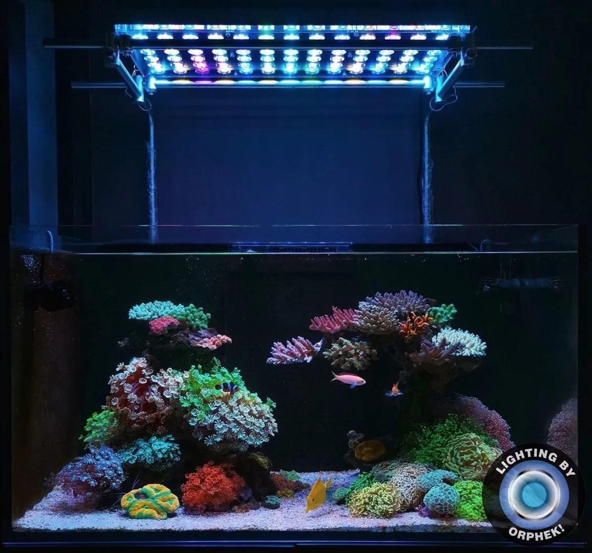 Atlantik V4 Reef Aquarium Led Beleuchtung Orphek Leds Lichter