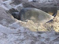 turtles14
