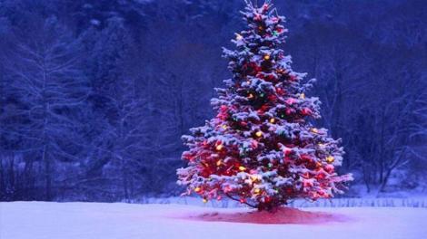 Το δένδρο των Χριστουγέννων