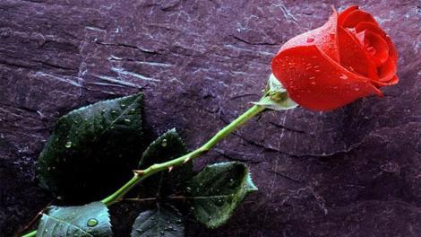 π. Σπυρίδων Σκουτής: Σταύρωση και Ανάσταση με ένα τριαντάφυλλο