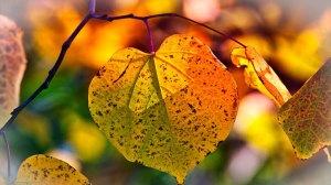 Σήμερα η φθινοπωρινή ισημερία - Και επίσημα μπαίνουμε στο φθινόπωρο