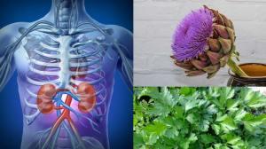 Ποια βότανα βοηθούν την καλή νεφρική λειτουργία
