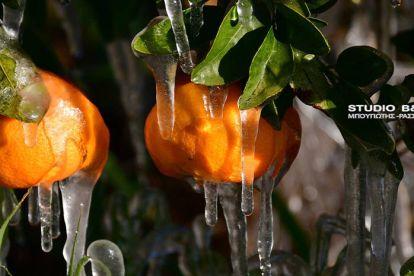Πάγωσε η Αργολίδα με τη θερμοκρασία να φτάνει στους μείον πέντε βαθμούς κατά τόπους στον Αργολικό κάμπο.