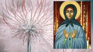 Σήμερα 19 Φεβρουαρίου γιορτάζει η Οσία Μαρία του Όλονετς