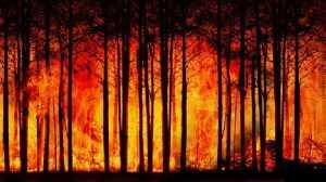 Deutsche Welle : Ο Γερμανικός τύπος για τις φωτιές στην Ελλάδα