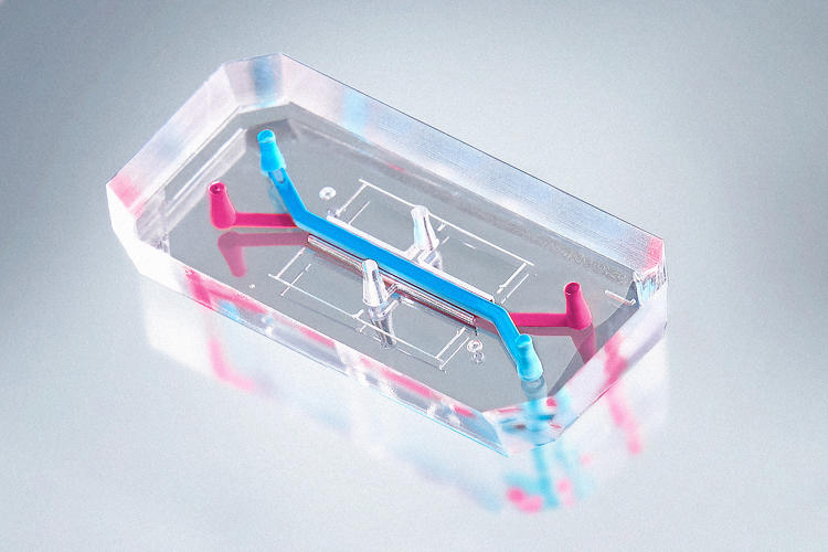 3055583-slide-s-1-how-a-lung-on-a-chip-could-help-asthma-patients