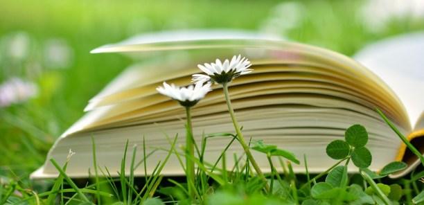 book-2304389_960_720.jpg