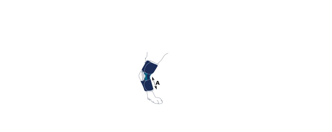 """Certifique-se de que haja espaço suficiente na perna do seu cão entre o tarso e as falanges . Veja a distância """"A"""" na cinta abaixo."""