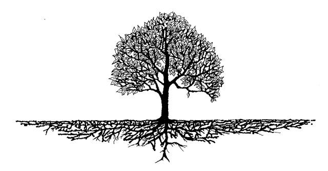 reabsorção autoligados