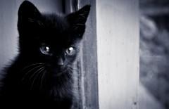 pisici-mici-311 (1)