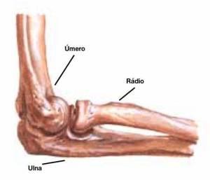 fratura do cotovelo pode estar relacionada a úmero distal, da cabeça do rádio ou da ulna proximal (olécrano)