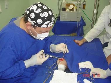 dr-walter-elia-ortopedista-veterinario-3