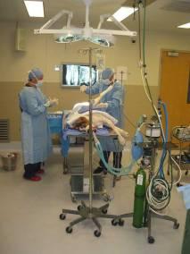 dr-walter-elia-ortopedista-veterinario