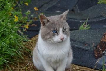 Selbst die Augen der Katze sind wie die Flüsse blau und türkis...