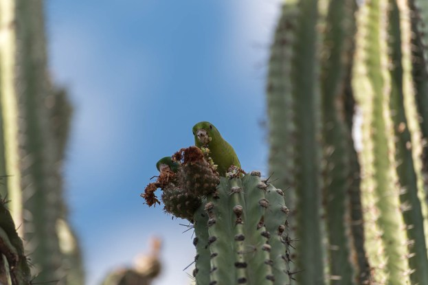 Desierto de Tatacoa