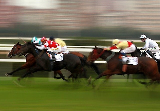 horse-1911382_640.jpg