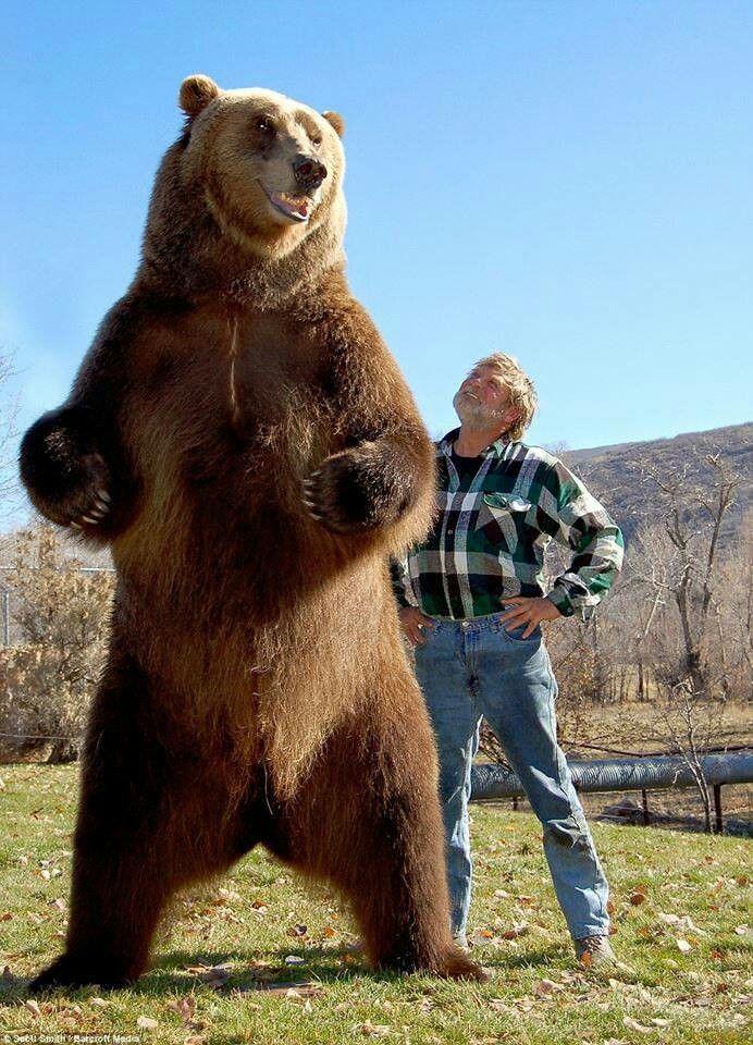 Medvjed Bart i njegov trener Doug Seus