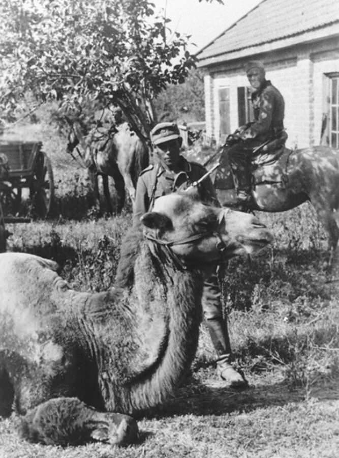 Nemci su takodje koristili zarobljene kamile