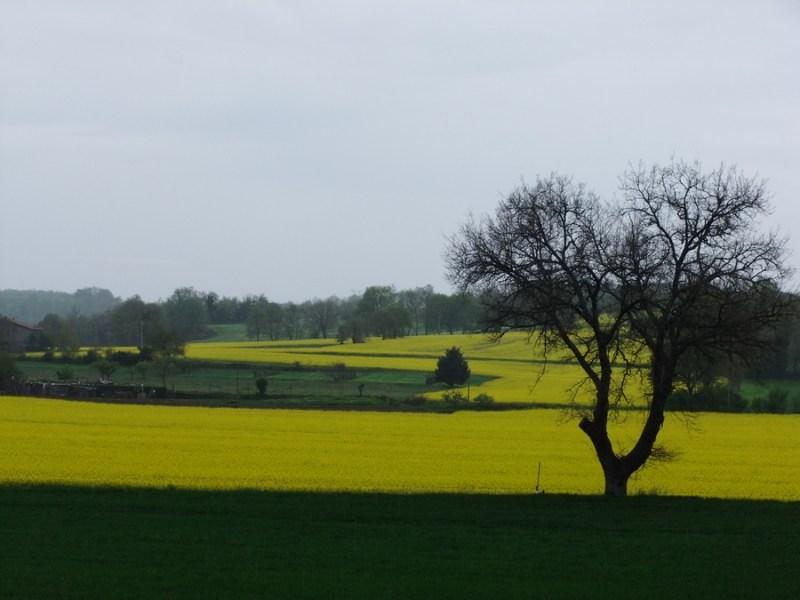 Campi di colza nelle highlands di Case Perazza