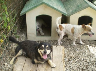 Cani salvi e nuovo canile, il Comune si occuperà della messa a norma della struttura