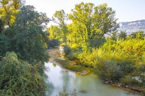 Gli alberi del fiume: problema o risorsa?