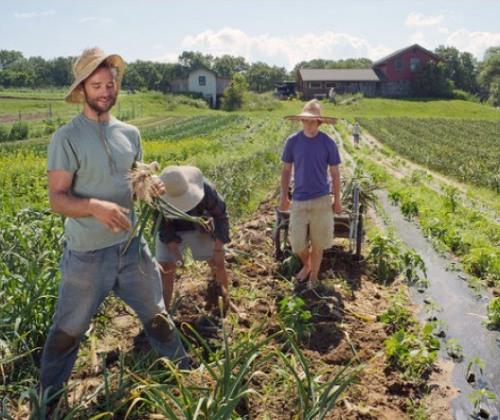 Pagamenti in agricoltura, approvato il decreto di riforma dell'Agea. Attivato ufficio decentrato in Regione