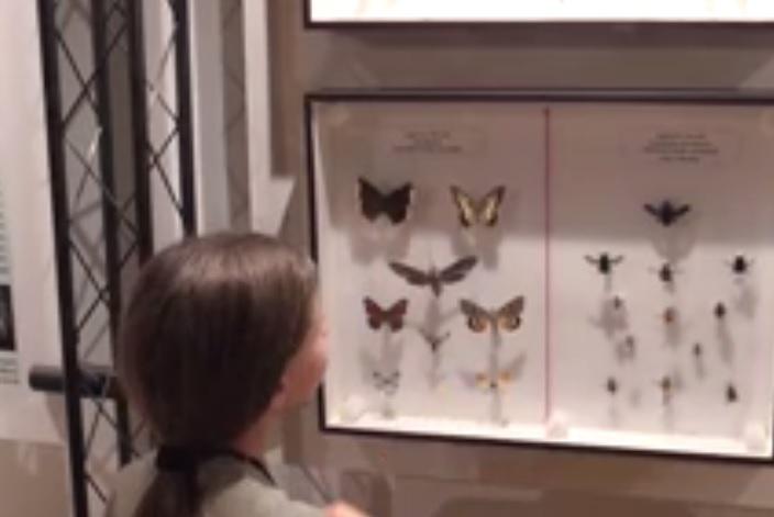Nuovo video per Francesco Barberini, classe 2007, aspirante ornitologo