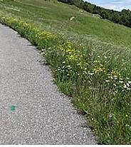 Lugnano in Teverina, sindaco Filiberti impone manutenzione verde privato a ridosso strade