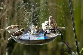 """""""Bird Gardening"""" la Biodiversità attorno a noi con l'attività del Liceo Artistico di Orvieto"""