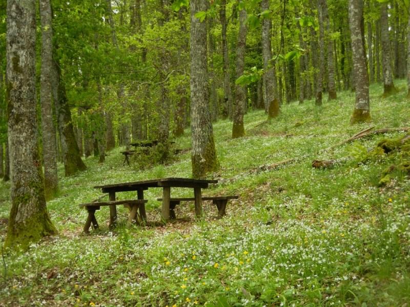 """""""Allerona Petit Tour"""" torna nei boschi della Selva di Meana. Obiettivo: l'Anello delle Spiagge"""